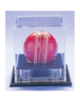 Acrylic Ball Display - Cricket/Baseball/Softball